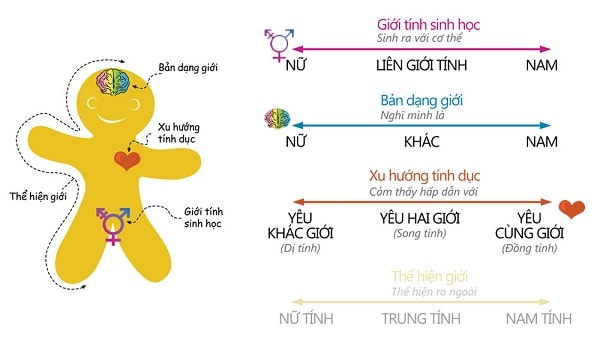 Gay-la-gi-Co-nhung-loai-Gay-pho-bien-nao-2