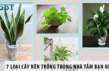 7 loại cây nên trồng trong nhà tắm bạn nên biết