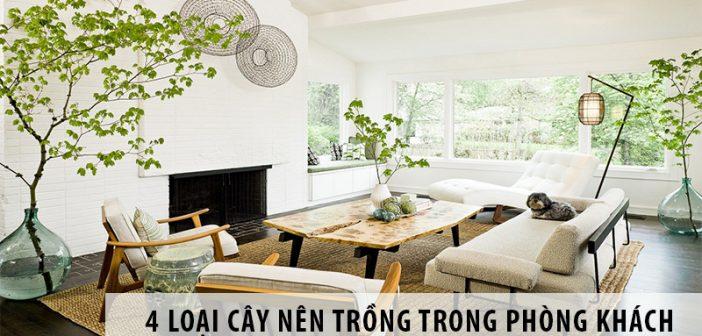 4 loại cây nên trồng trong phòng khách để rước lộc vào nhà