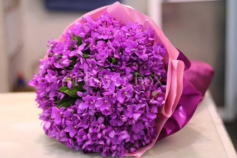 Sinh nhật người yêu đồng tính nam nên tặng hoa tử đinh hương